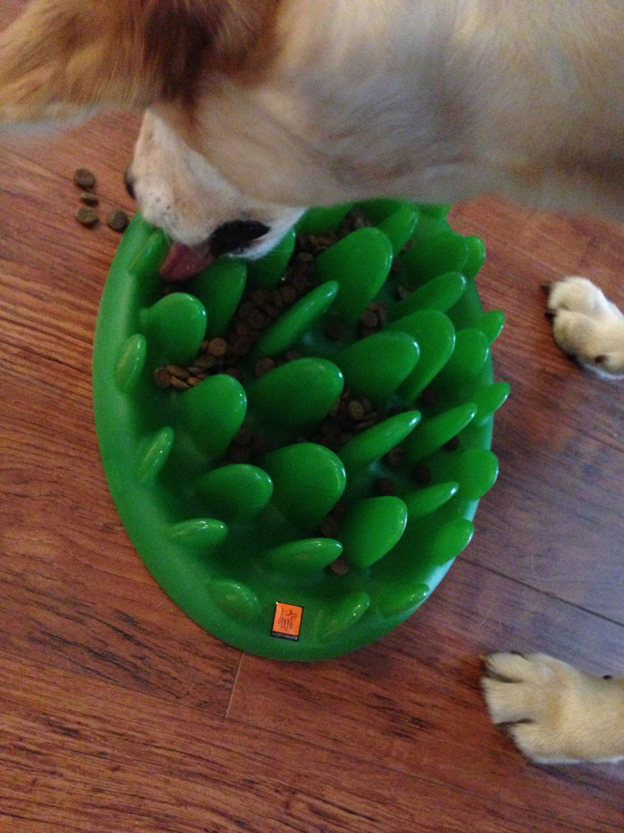 Forget the food bowl: Interactive toys for dogs and how to use them ... | Mentally Stimulating Dog Toys